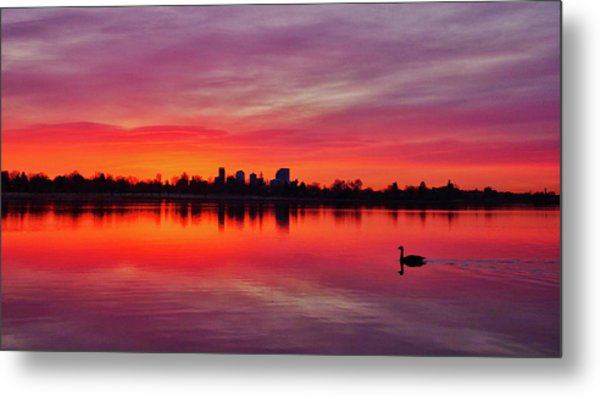 Early Morning Swim Metal Print