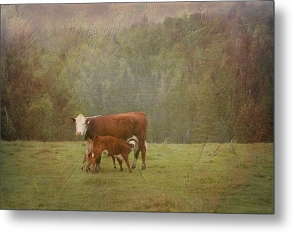 Early Morning Breakfast-cow Style Metal Print