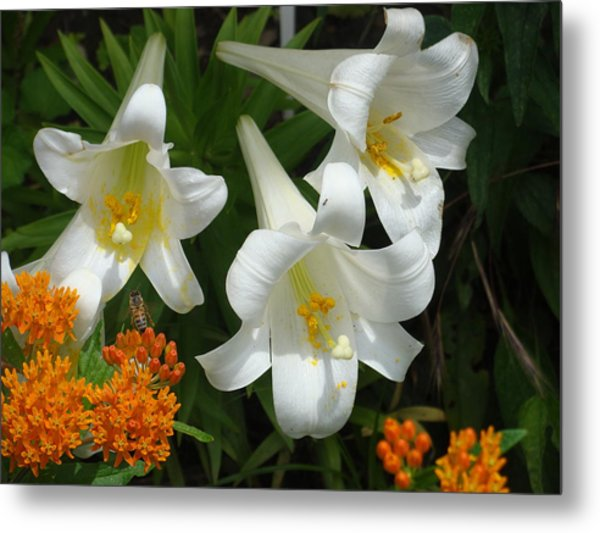 Easter Lilies And Butterfly Weed Metal Print