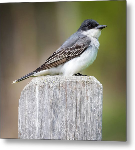 Metal Print featuring the photograph Eastern Kingbird 2018 by Ricky L Jones