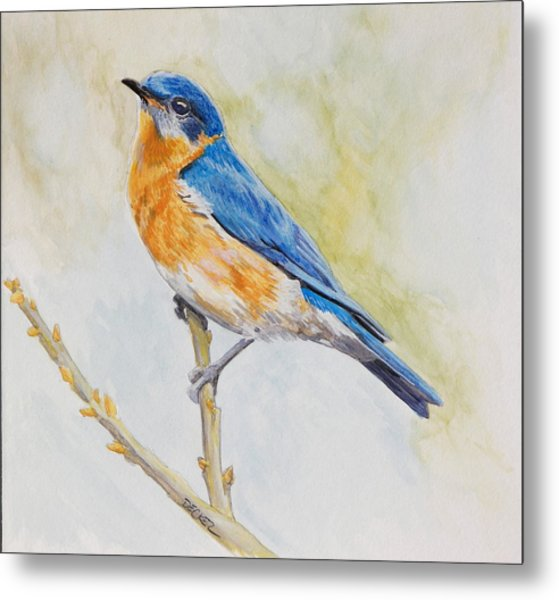 Eastern Mountain Bluebird Metal Print