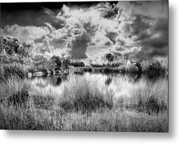 Everglades Lake 5678bw Metal Print