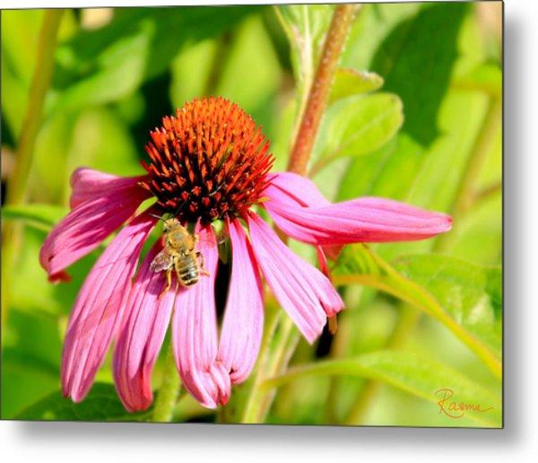 Echinacea Bee Metal Print