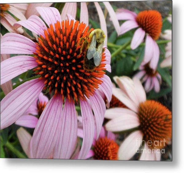 Echinacea Tea Time For Bee Metal Print