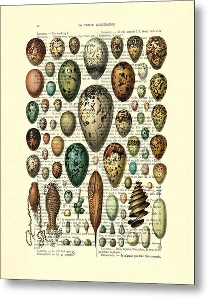 Eggs Collection Metal Print