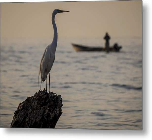 Egret And Boat Metal Print by Dane Strom