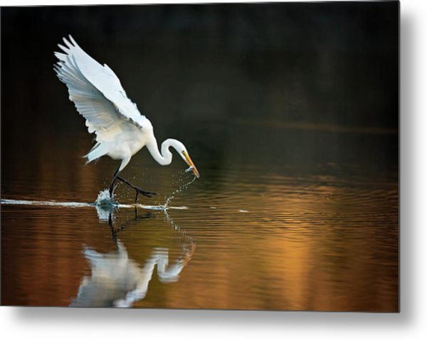 Egret At Sunset Metal Print