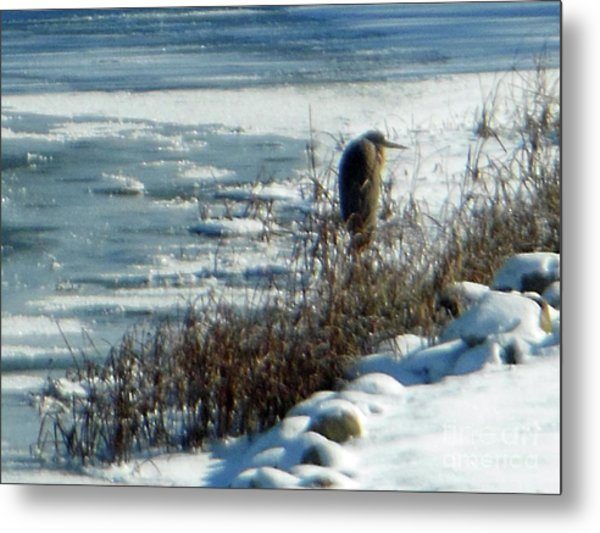 Egret Frozen Lake Metal Print
