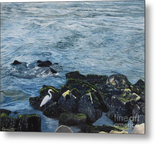 Egret On Shore Of Barnegat Bay Metal Print