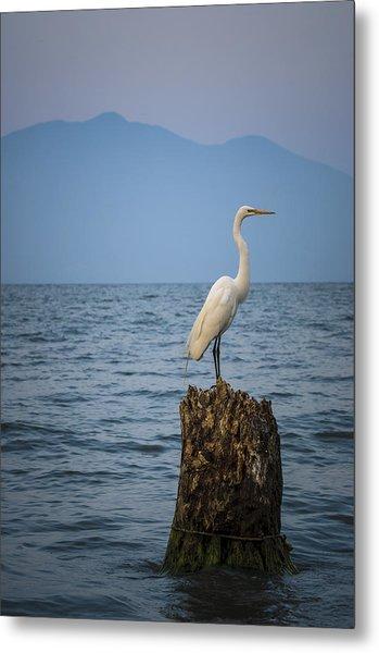 Egret On Tree Stump At Lake Chapala Metal Print by Dane Strom