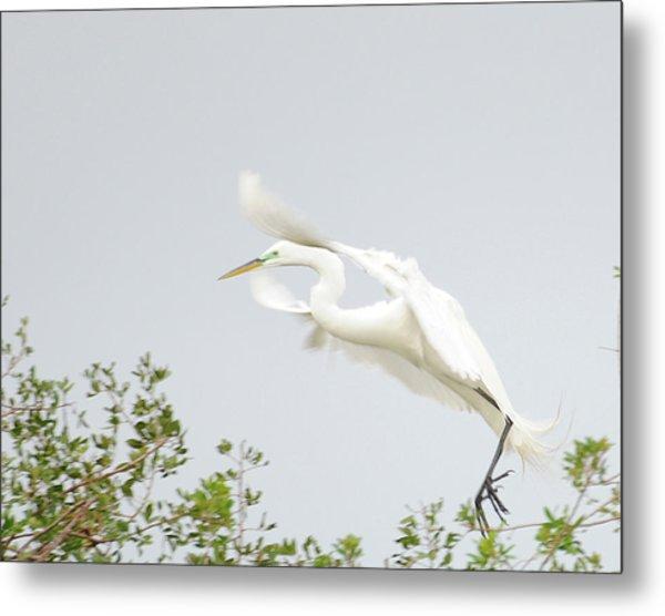 Egret-taking Flight Metal Print by Keith Lovejoy