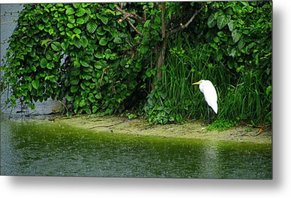 Egret Wakodahatchee Florida Wetlands Metal Print