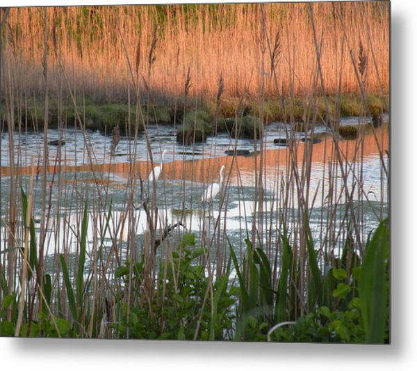 Egrets At Sunrise Metal Print by Donald Cameron