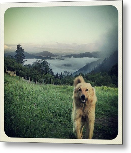 Egunon Chuvak! #dog #animal #pet Metal Print