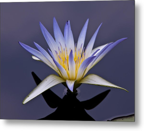 Egyptian Lotus Metal Print