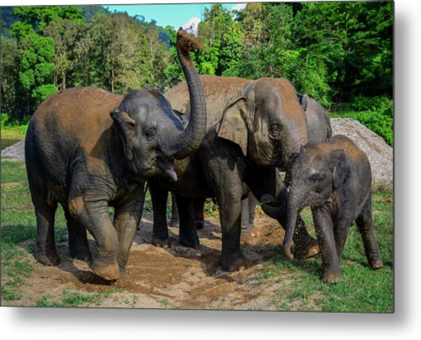 Elephant Cool Down Metal Print