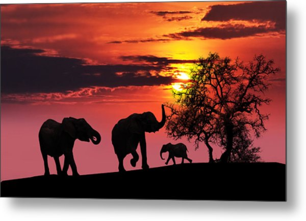 Elephant Family At Sunset Metal Print