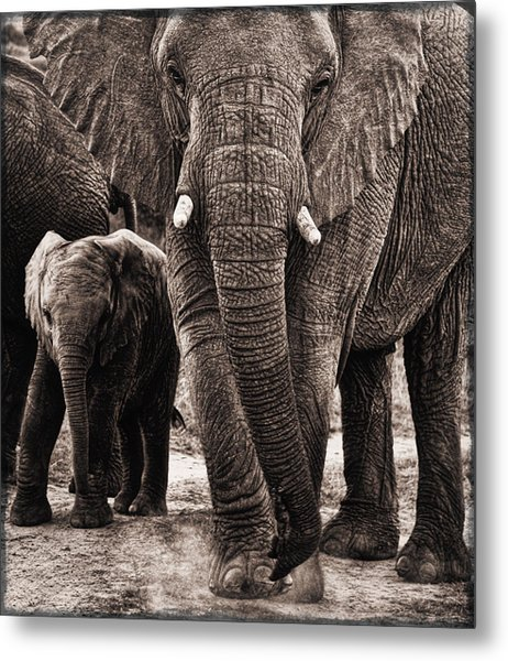 Elephant Family Time Metal Print