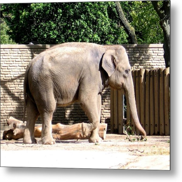 Metal Print featuring the photograph Elephant by Rose Santuci-Sofranko