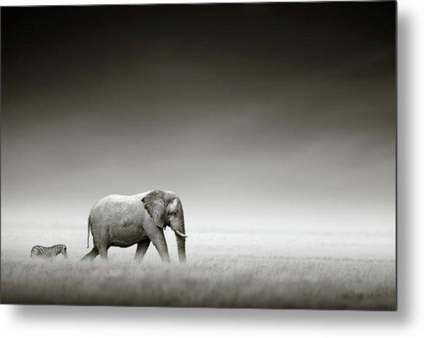 Elephant With Zebra Metal Print
