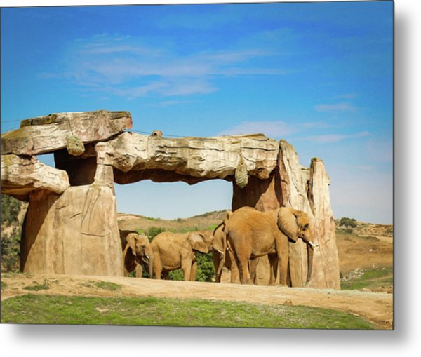Metal Print featuring the photograph Elephants by Alison Frank