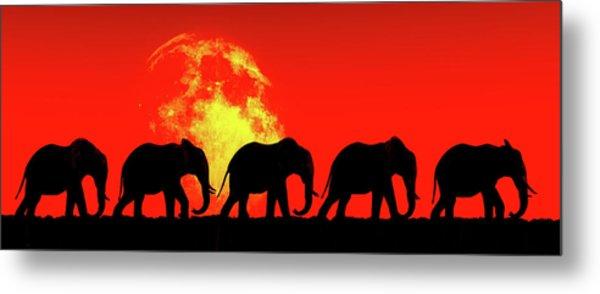 Elephants Walk In The Red Sky Metal Print