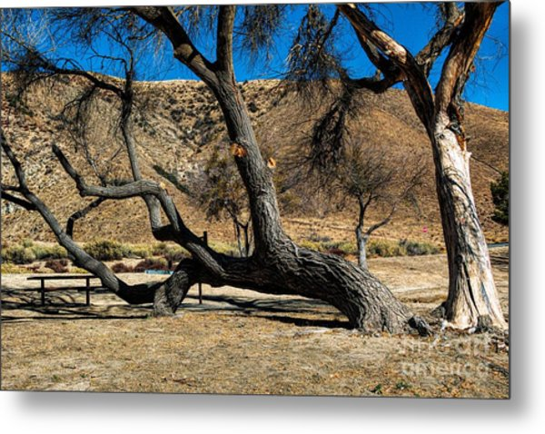 Elizabeth Lake Tree Metal Print