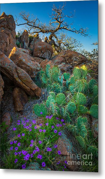 Elk Mountain Flowers Metal Print