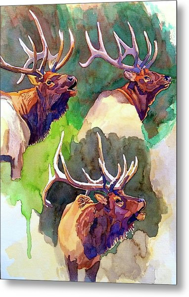 Elk Studies Metal Print