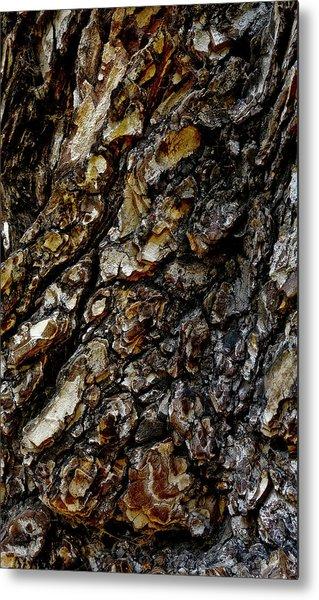 Elm Tree Bark Pattern Metal Print by Frank Tschakert