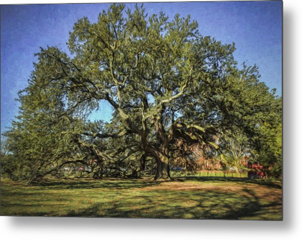 Emancipation Oak Tree Metal Print