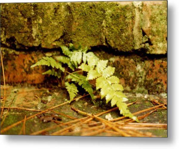 Emerald Dream Metal Print by Jan Amiss Photography