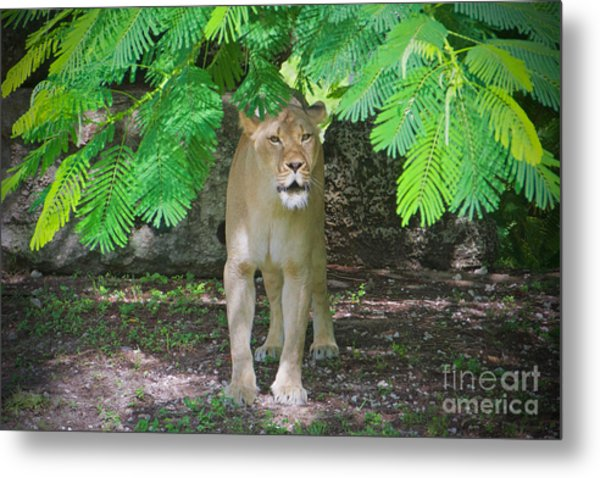 Emerging From The Shadows Metal Print