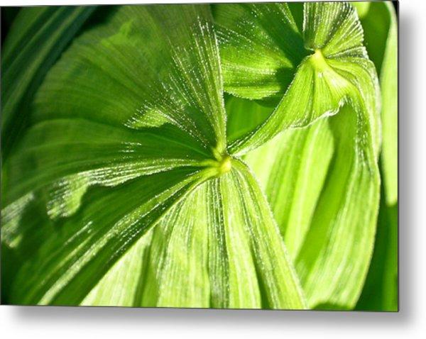 Emerging Plants Metal Print