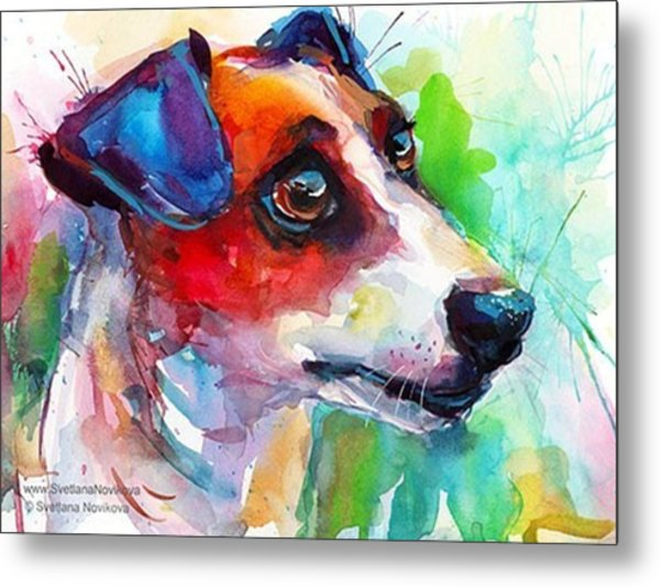 Emotional Jack Russell Terrier Metal Print