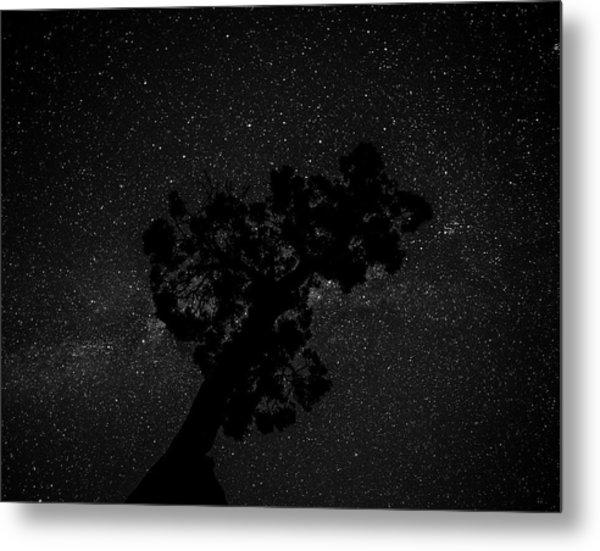 Empty Night Tree Metal Print