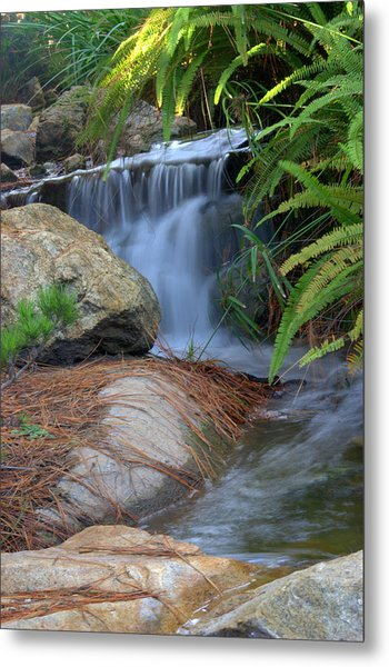 Enchanted Forest Metal Print by Brad Scott