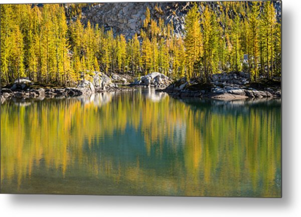 Enchanted Larches Metal Print
