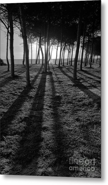 Enchanted Sunset In Monochrome Metal Print