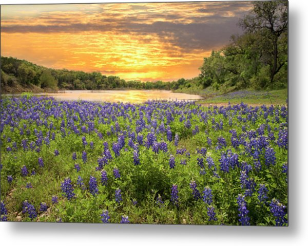 End Of A Bluebonnet Day Metal Print