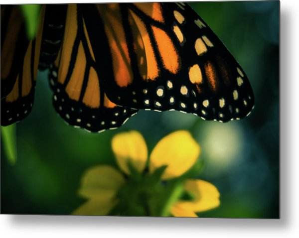 End Of Summer Monarch Metal Print