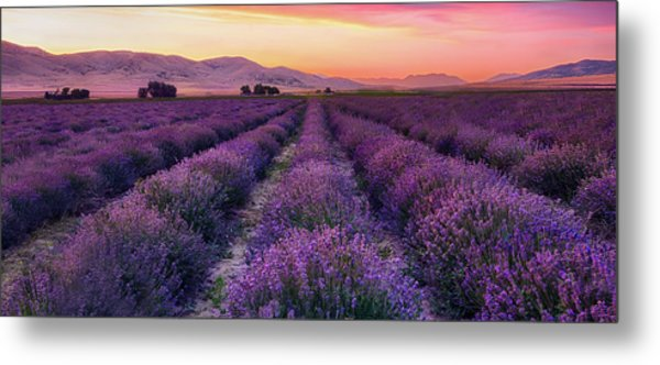 Endless Lavendar 65 Metal Print