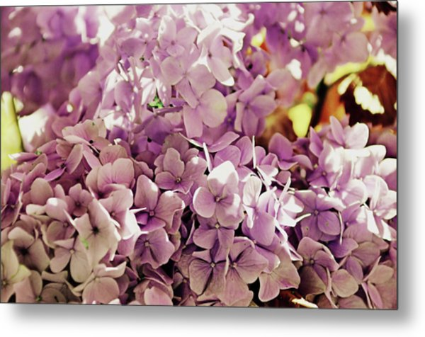 Endless Summer Color Metal Print by JAMART Photography