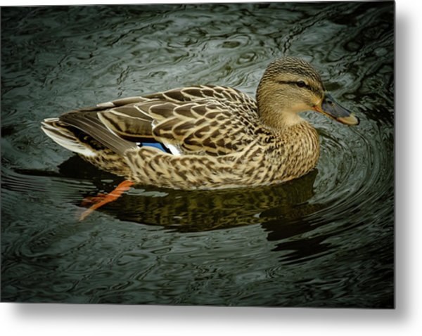 Enjoying A Swin Metal Print
