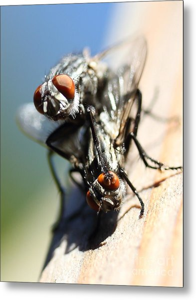 Entomologists Discover Why People Want To Be A Fly On The Wall Metal Print by Wingsdomain Art and Photography