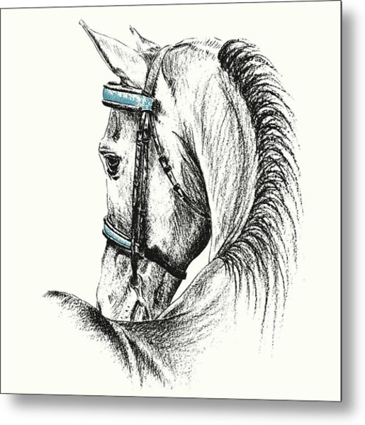 Equine Sketches Metal Print by JAMART Photography