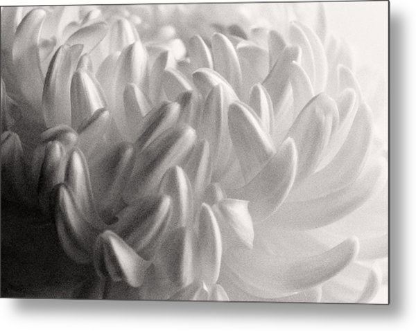 Ethereal Chrysanthemum Metal Print