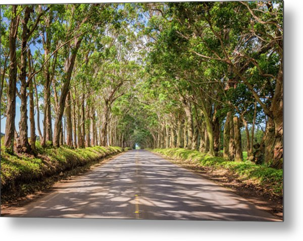 Eucalyptus Tree Tunnel - Kauai Hawaii Metal Print