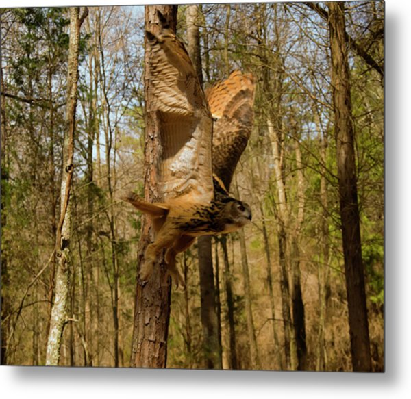Eurasian Eagle Owl In Flight Metal Print
