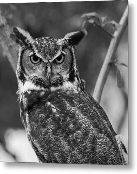 Eurasian Eagle Owl Monochrome Metal Print